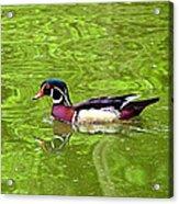 Water Wood Duck Acrylic Print