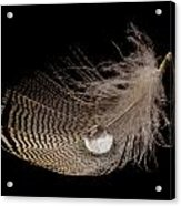 Wet Feather Acrylic Print
