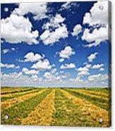 Wheat Farm Field At Harvest In Saskatchewan Acrylic Print by Elena Elisseeva
