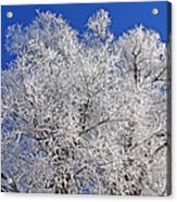 White Frost Tree  Acrylic Print