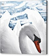 White Swan On Water Acrylic Print
