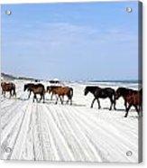 Wild Spanish Mustangs Of The Outer Banks Nc Photograph By Kim Galluzzo Wozniak