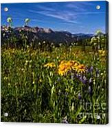 Wildflower Meadows And The Anthracite Range Acrylic Print