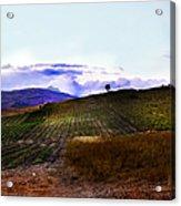 Wine Vineyard In Sicily Acrylic Print