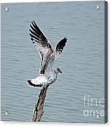 Wings Up Acrylic Print