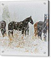 Winter Horses Acrylic Print