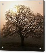 Winter Tree On A Frosty Morning, County Acrylic Print