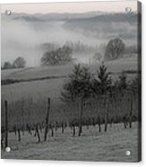 Winter Vineyard Acrylic Print by Jean Noren