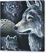 Wolf Trio Acrylic Print