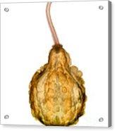 X-ray Of Fall Decorative Gourd Acrylic Print