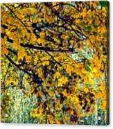 Yellow Leaves Acrylic Print