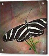 Zebra Longwing  Butterfly-2 Acrylic Print