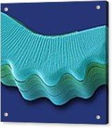 Diatom, Sem Acrylic Print