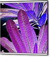 Leaves Acrylic Print