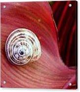 Garden Snail Acrylic Print
