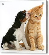 Puppy And Kitten Acrylic Print by Jane Burton