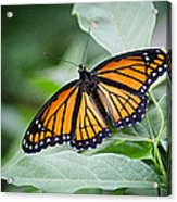 1205-8934 Monarch In Spring Acrylic Print by Randy Forrester