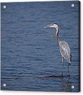 1206-9280 Great Blue Heron 1 Acrylic Print