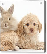 Puppy And Rabbit Acrylic Print