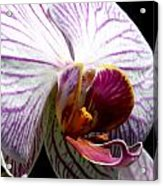 Orchid Flower Bloom Acrylic Print