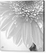 1491c4 Acrylic Print