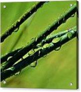 Raindrops On Bamboo Grass Acrylic Print