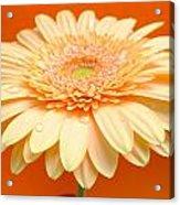 1521-003 Acrylic Print