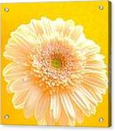 1527c-002 Acrylic Print