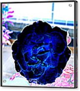 Flowers Flowers And Flowers Acrylic Print