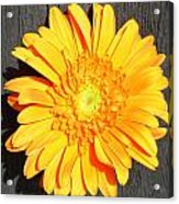 1599-001 Acrylic Print
