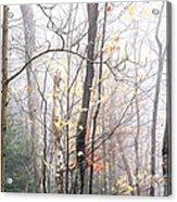 Autumn Monongahela National Forest Acrylic Print
