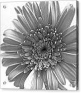 1609-002 Acrylic Print