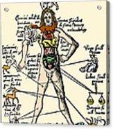16th-century Medical Astrology Acrylic Print