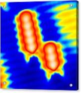 Spintronics Research, Stm Acrylic Print by Drs A. Yazdani & D.j. Hornbaker
