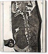 1726 Scheuchzer Homo Diluvii Testis Acrylic Print
