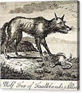1778 Falkland Islands Wolf Fox Extinct Acrylic Print