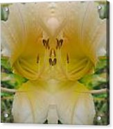 Lily Fantasy Acrylic Print