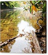 Fall Along Williams River Acrylic Print