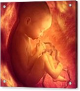 Human Foetus In The Womb, Artwork Acrylic Print