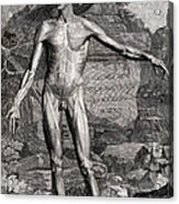 18th Century Anatomical Engraving Acrylic Print