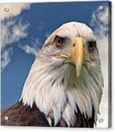 American Bald Eagle Acrylic Print