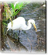 Beauty In The Swamp Acrylic Print