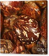 Castor Beans Acrylic Print
