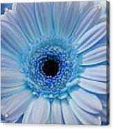 Cheeriest Blue Acrylic Print
