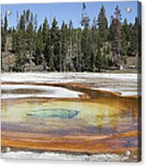Chromatic Pool Hot Spring, Upper Geyser Acrylic Print