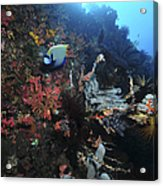 Colorful Reef Scene With Coral Acrylic Print