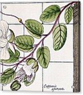Colosseum: Flower Acrylic Print