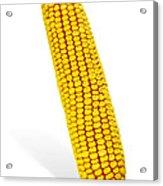 Corn Cob Acrylic Print