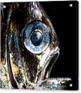 Deep Sea Hatchetfish Acrylic Print