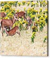 Deers Acrylic Print by MotHaiBaPhoto Prints